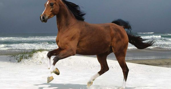 A thousand horses, the wild, the free, Like waves that follow o'er