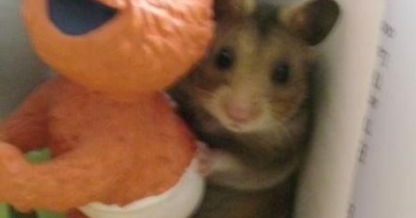 Hiding Hamster made me smile