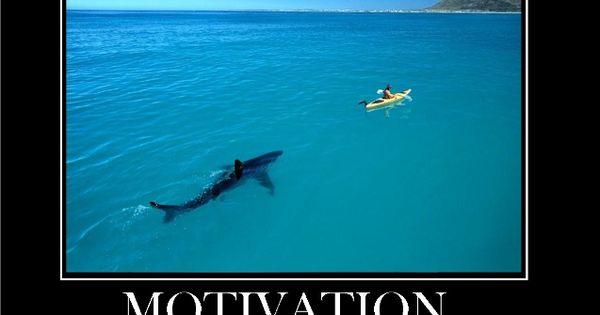 Shark Motivation « Motivational Images   Motivation ...