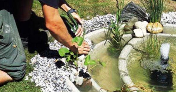 Hacer un peque o estanque en el jard n gardening - Estanques en el jardin ...