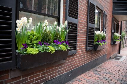 Creating A Window Box For Your Apartment Flowers