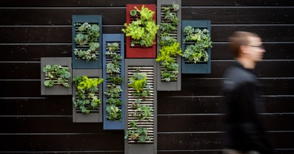 More vertical gardening ideas. Repurposed shutters turned into vertical planters. Yes, please.