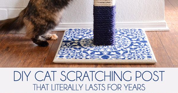 how to keep your cats from scratching carpet