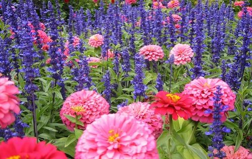 Perennial Flower Identification | perennial flower identification sense of enormous proportions grown