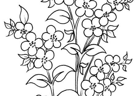 Dogwood Coloring Pages For The Old Coloring Pages