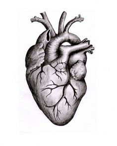 Real Heart Drawing : heart, drawing, Heart, Пошук, Google, Anatomical, Drawing,, Human, Anatomy, Tattoo