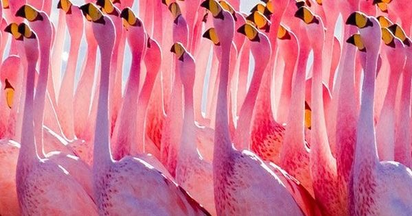 Pink flamingo. Go to www.YourTravelV or just click on photo for home
