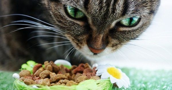 The Wet Versus Dry Cat Food Debate Has Been Going On For Years But Science Has Discovered What Cats Crave And Need To Su Cat Food Dry Cat Food Cat Safe