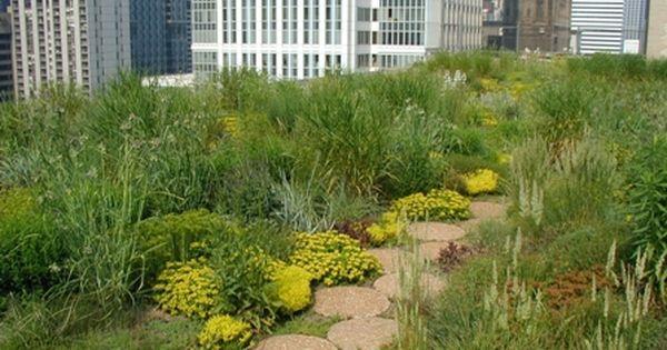 Chicago City Hall Green Roof Fantastic Rooftop Garden Roof Garden Urban Garden