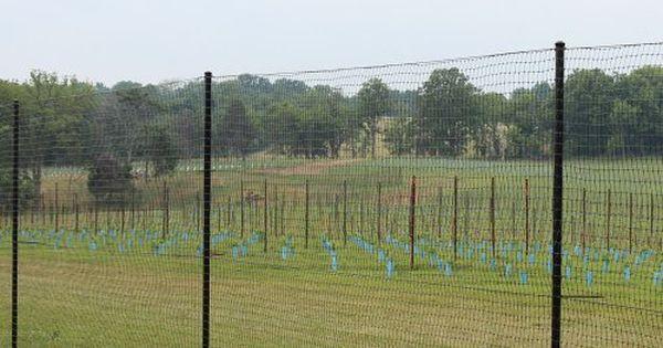 6 39 X 100 39 Standard Perimeter Deer Fence By Deerbusters