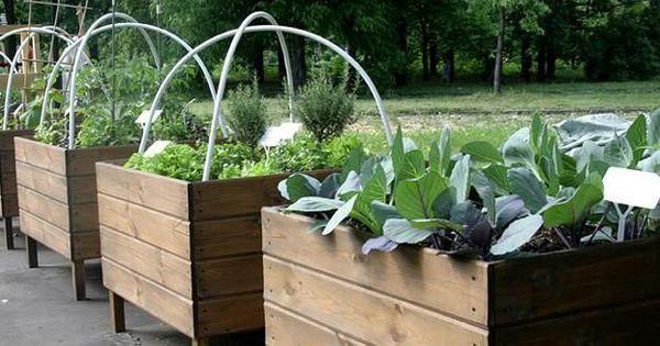 Raised Garden Beds Over Leach Field