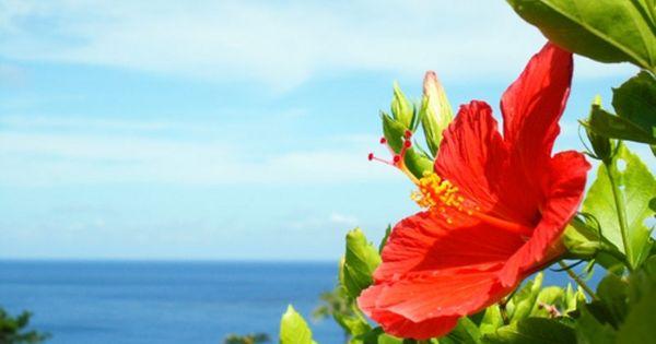 ハワイアンジュエリーモチーフの意味ハイビスカス アロアロ 季節の生花種類 ハイビスカス ハイビスカスの花