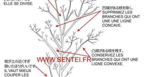 taille rable du japon taille japonaise sentei bonsai pinterest bonsai acer palmatum. Black Bedroom Furniture Sets. Home Design Ideas
