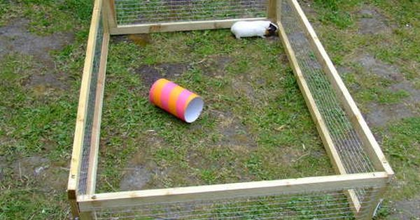 Pin On Guiana Pig Garden