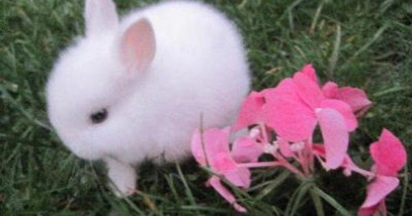 Niedliche Tiere Bild Von Kia Mitty Auf Baby In 2020