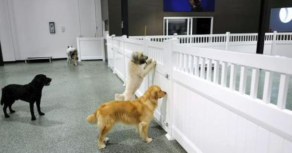 D Pet Hotels A Luxury Resort Spa For The Distinguished Dog