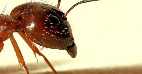 ... | It's a bug's l