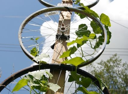 Bicycle wheel trellis. This I definitely want to make next summer!