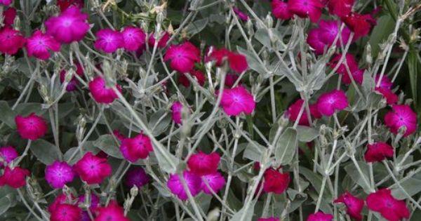 Epingle Sur Idees Pour Le Jardin