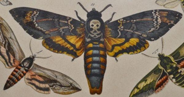 Tentacle Garden Mit Bildern Motten Tattoo Insektenkunst Taubenschwanzchen