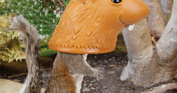 Big Head Squirrel Feeder - Feed and humiliate squirrels at the same