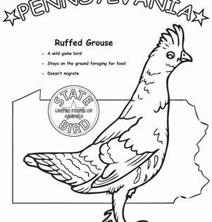 Pennsylvania State Bird State Birds Pennsylvania History