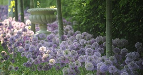 CLAUS DALBY Garden: I don't know what those purple flowers are, but