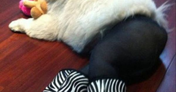 Dogs in pantyhose is now a thing. It hurts... Omg this is