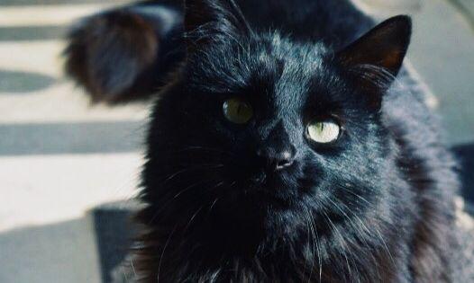 Pin Von Maxi Winter Auf Cats