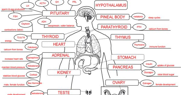 endocrine system concept map lab science pinterest anatomy
