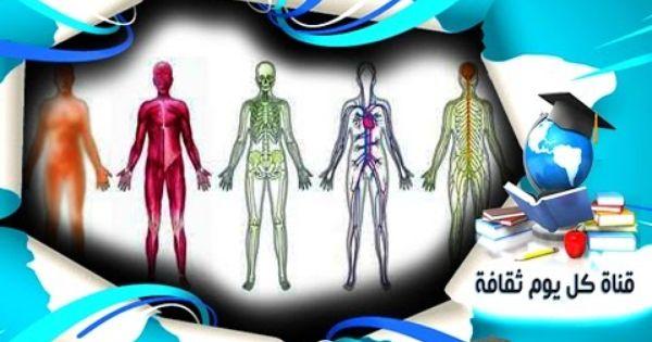 معلومات عن جسم الانسان اغرب الحقائق عن الجسم التى لن تصدقها عن جسم الا Wind Sock Decor Outdoor Decor