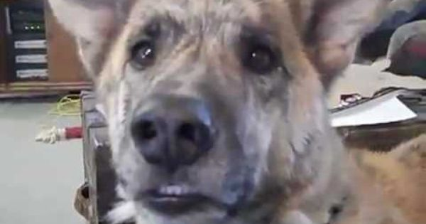 Owner Teases Dog With Food