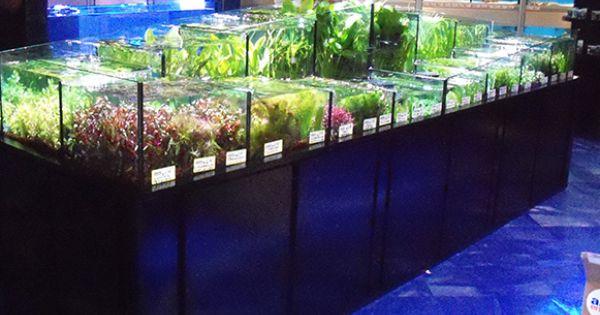 Tropical aquarium manufacturing plants station aquarium for Exotic fish shop