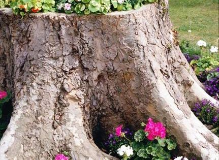 Perfect way to 'glam up' old tree stumps! (Garden Ideas | Spark | eHow.com)