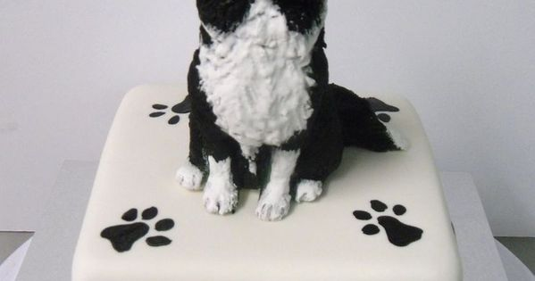 Border Collie Cake Yahoo Image Search Results Just