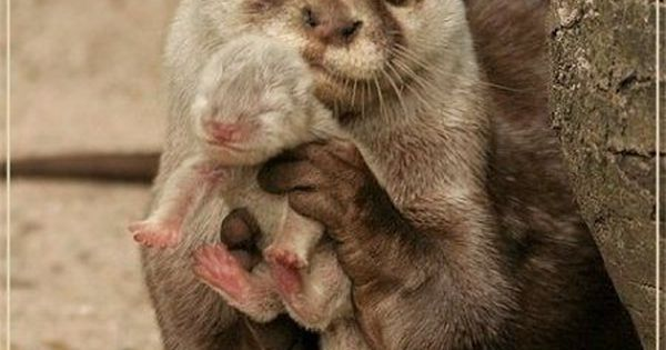Ermagah! So cute! Baby otter
