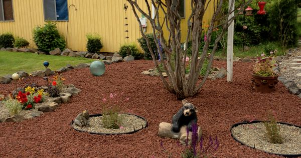 My New Landscaped Yard With Lava Rocks And Small Flower