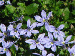 ボード 庭の花 のピン