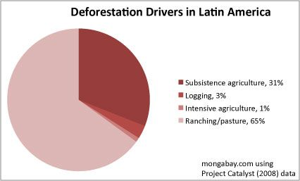 The Impact Of Cattle Ranching On Rainforests Deforestation