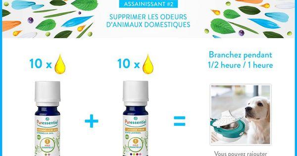 diy supprimer les odeurs d 39 animaux domestiques avec les huiles essentielles huiles. Black Bedroom Furniture Sets. Home Design Ideas