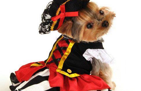 halloween girl dog costumes
