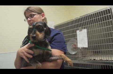 Girl Scouts And Boy Scouts Houston Spca Badge Opportunities Spca Dog Adoption Dogs And Puppies