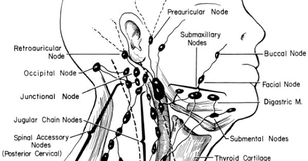 head lymph nodes