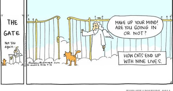 How cats end up with nine lives - DayLoL.com - Your Daily