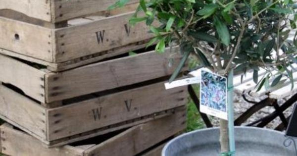Wooden Crates And Olive Tree In Galvanized Bucket A Life Reclaimed Pinterest Stains
