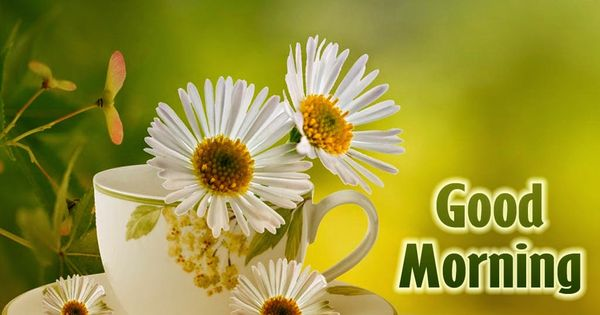Good Morning Sprüche Sms : Good morning quotes with images sms wishes