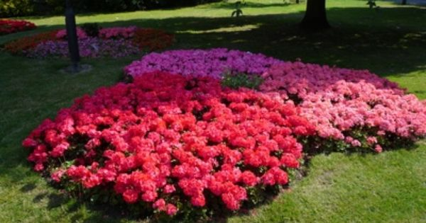 Flower Bed Ideas For The Front Of A House Facing East