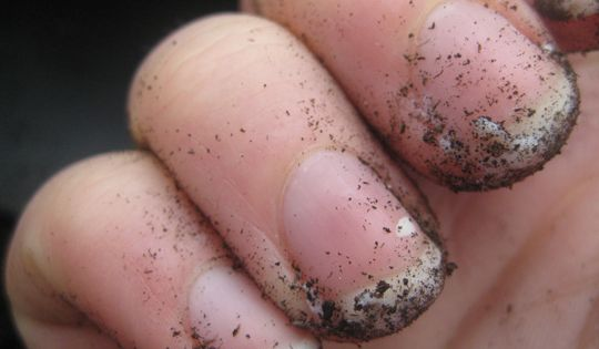 Great tip! Before gardening/yard work, drag your nails across a bar of