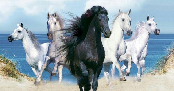 منوعات صور خيول Horse Wallpaper Beautiful Horses Horse Background