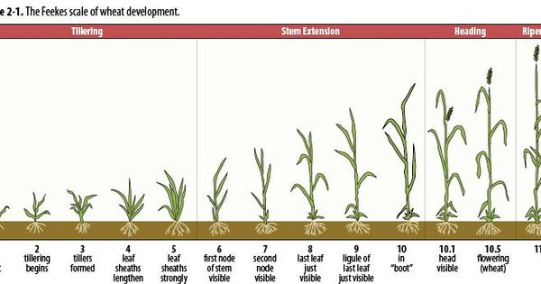 a study on growth in plants The study of plant growth: a link between the physiological ecology and population biology of plants ☆ author links open overlay panel james b mcgraw † rd wulff § show more.